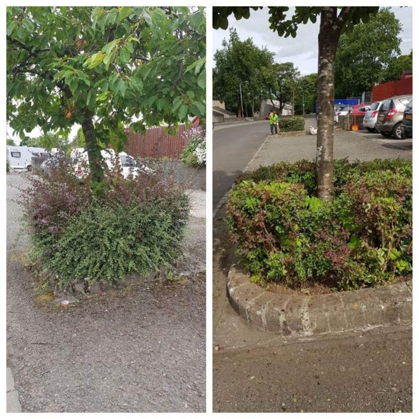 Traffic island shrubs Nobelston