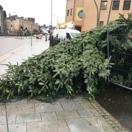 Cube staff came to the rescue when commemorative tree fell over in Maryhill